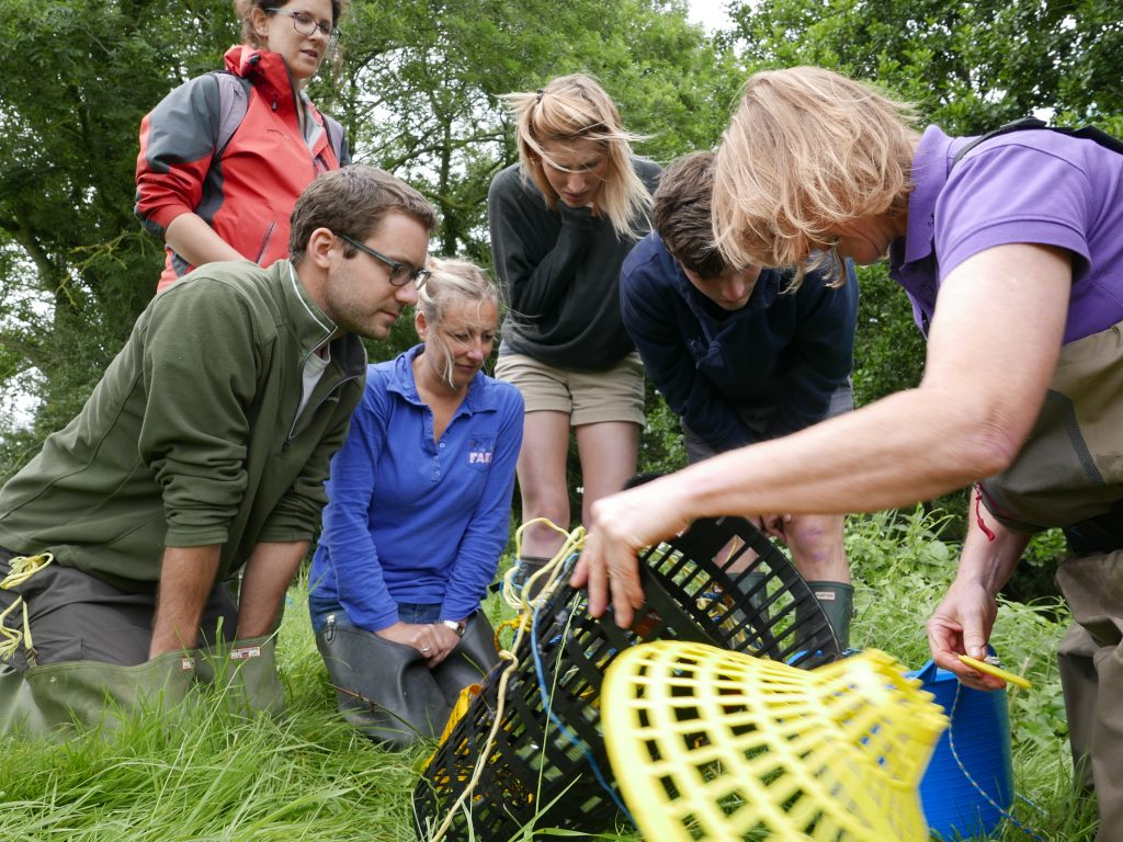 Crayfish survey training