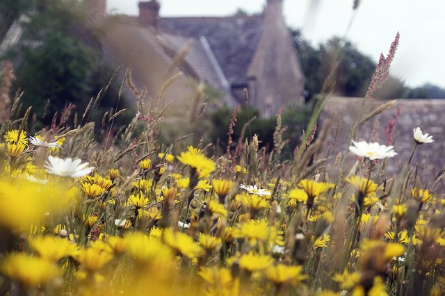 Goren Farm meadow