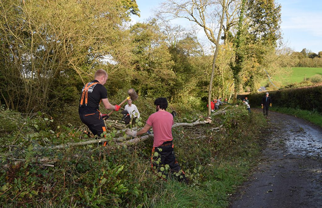 Hedgelaying. Photo: Blackdown HIlls Hedge Association