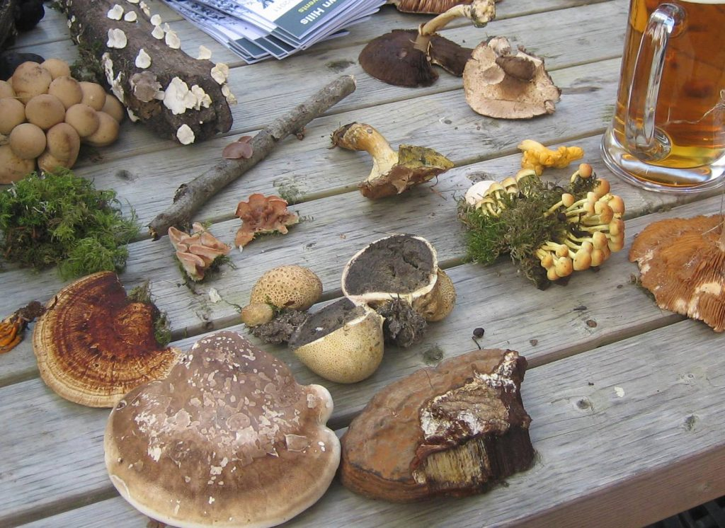 A selection of fungi on a table top
