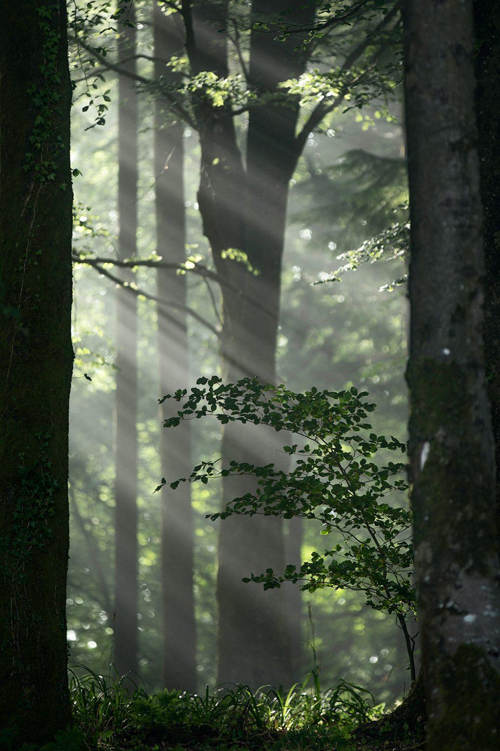 Castle Neroche light rays through trees