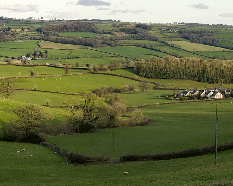 View from Yarcombe