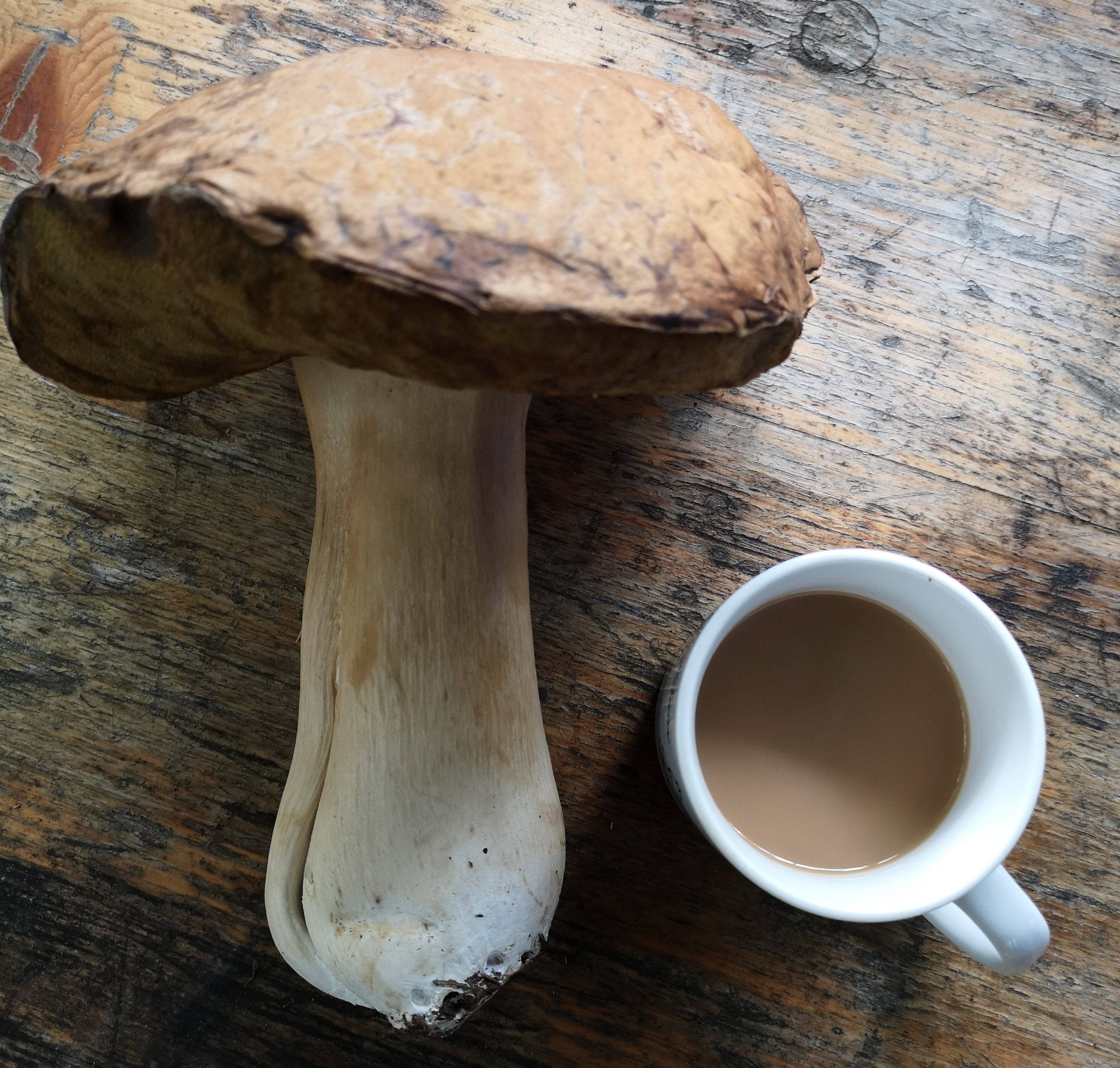 Cep Mushroom with mug of tea