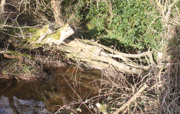 logs across a stream used to form a leaky debris dam