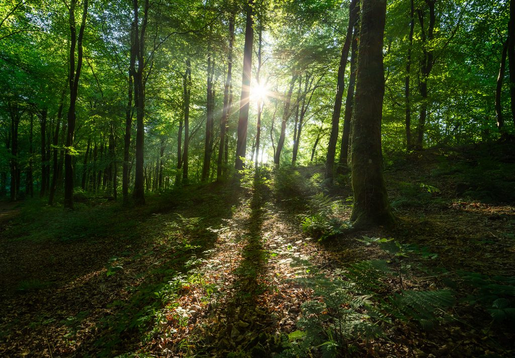 Sunlight peeping through trees in Castle Neroche woodland