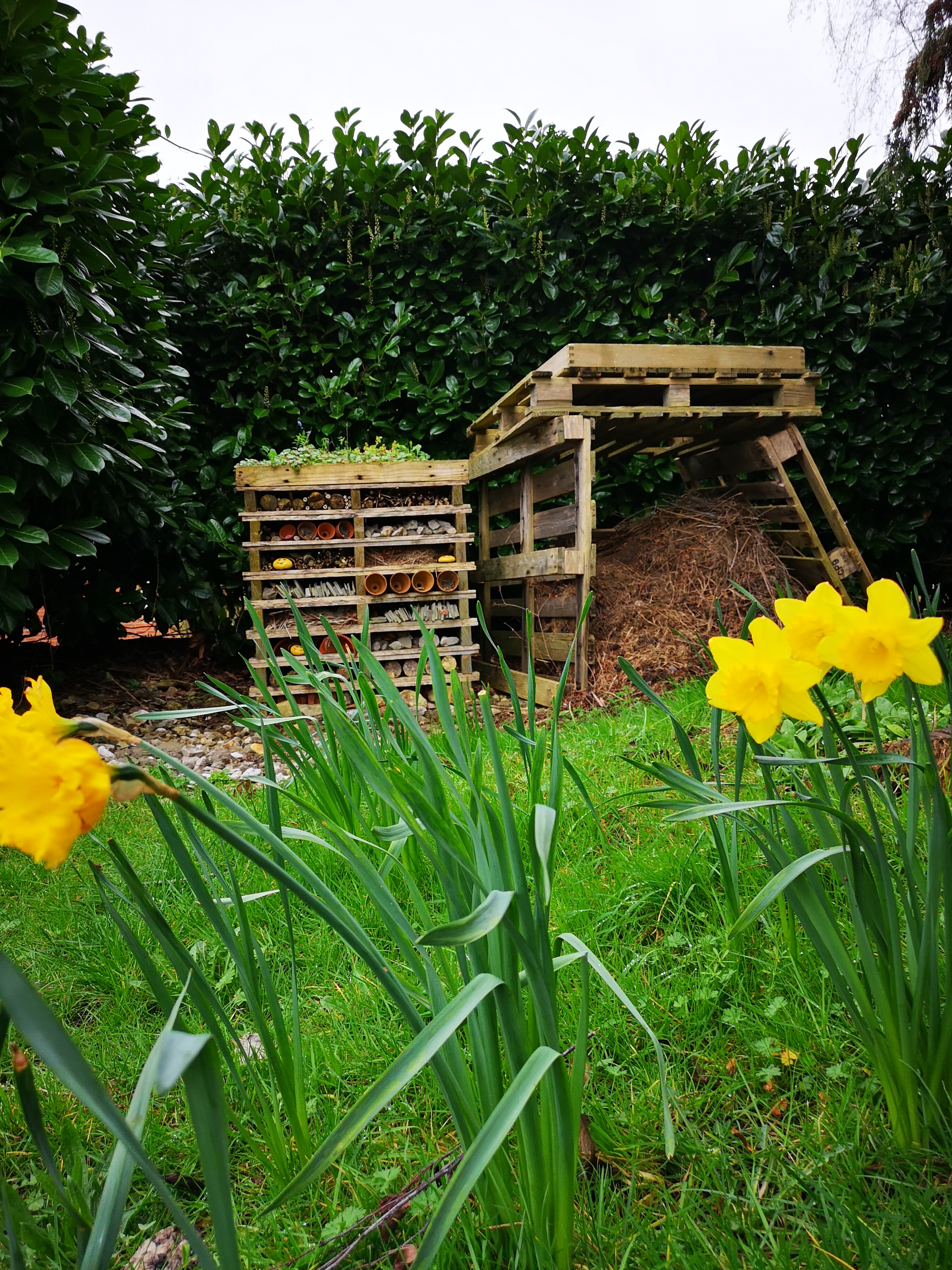 Bee hotel with turf roof and compost bin with daffodils in the foreground
