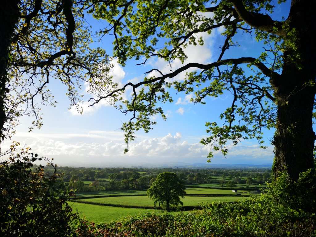 Countryside scene with a patchwork of fields and an oak tree framed with trees branches