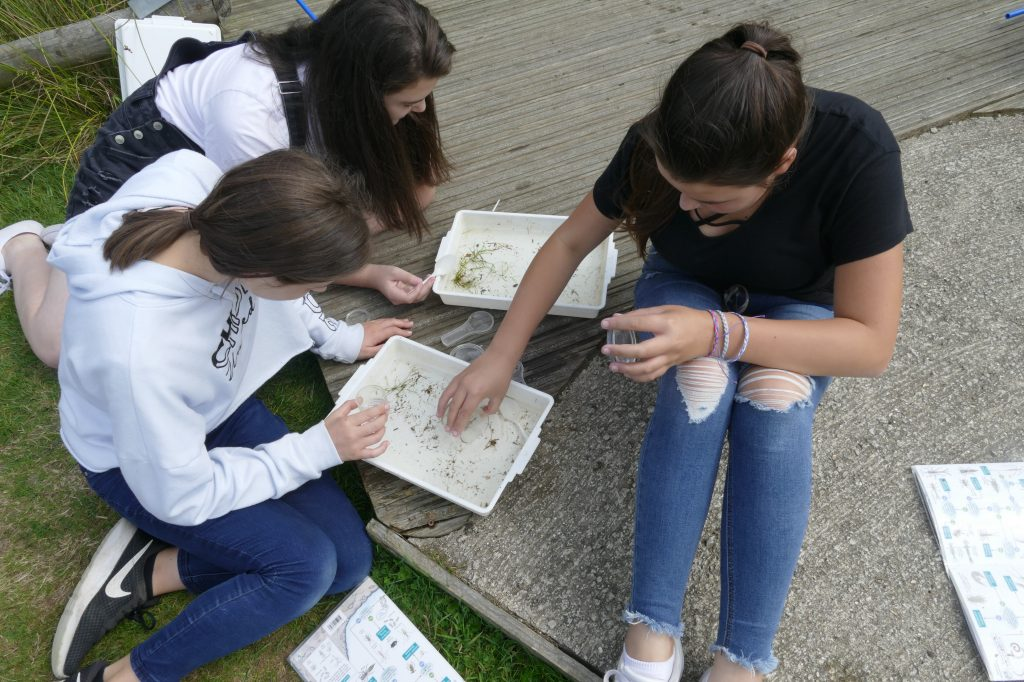 Dipping tray examination - Discovering Dragonflies at Ferne Animal Sanctuary