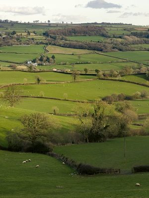 Yarcombe fields and hedgerows