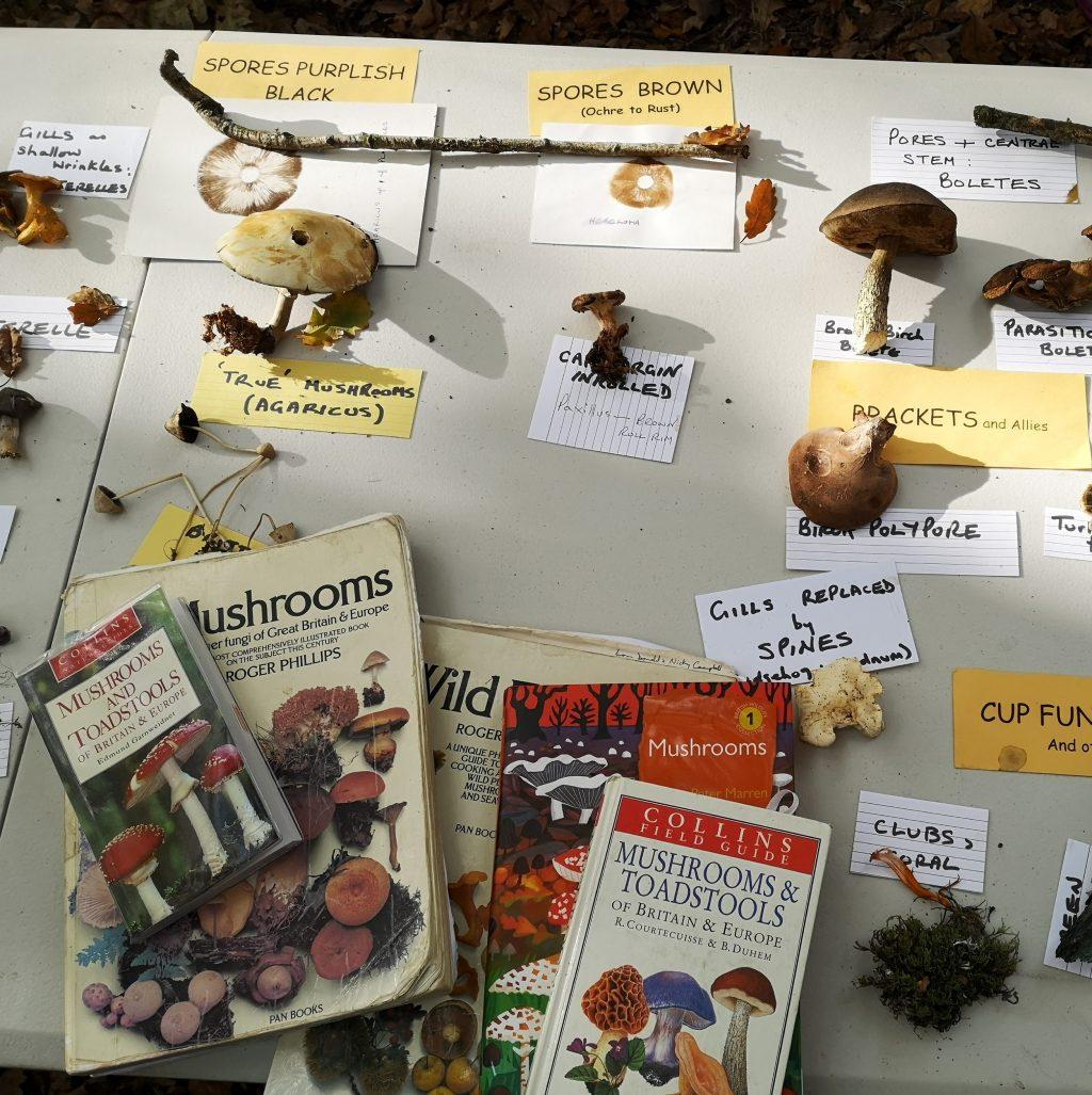 Fungi samples and books