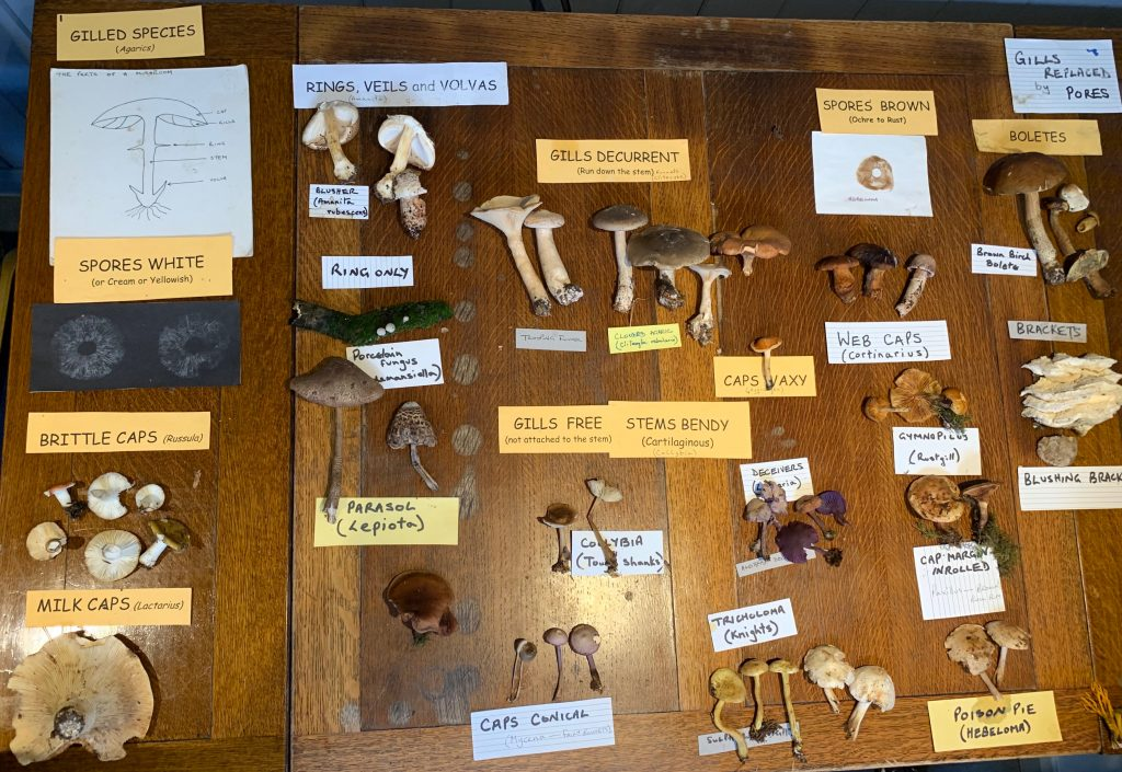Samples of mushrooms, labelled and on display on a table.