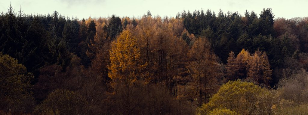 Autumnal scene of colourful trees