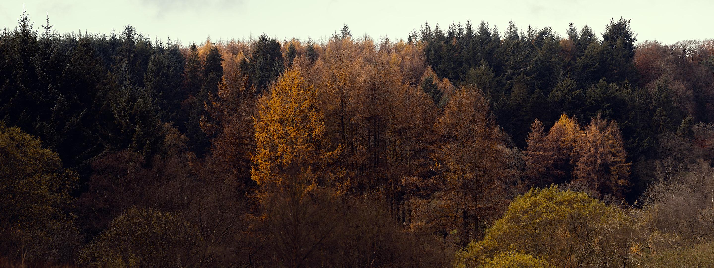Autumnal scene of colourful trees