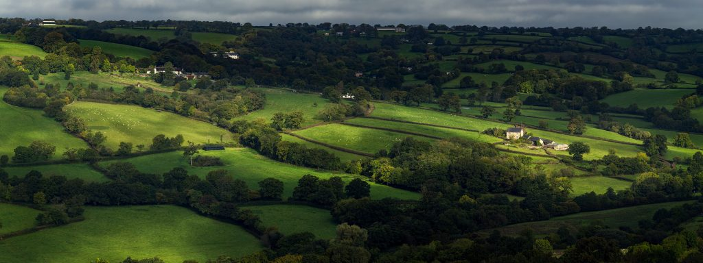 Field patterns, hedges and hedgerow trees at Dumpdon