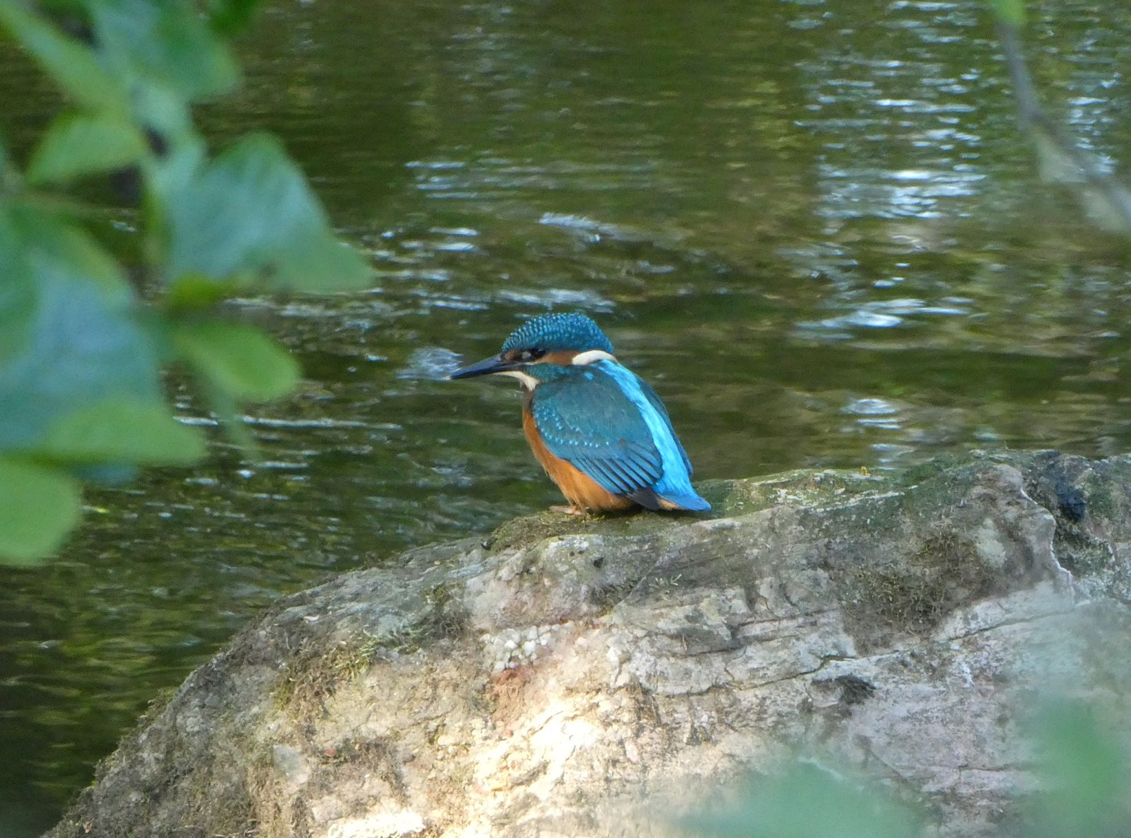 Bright blue and orange kingfisher standing on a rock at the river's edge
