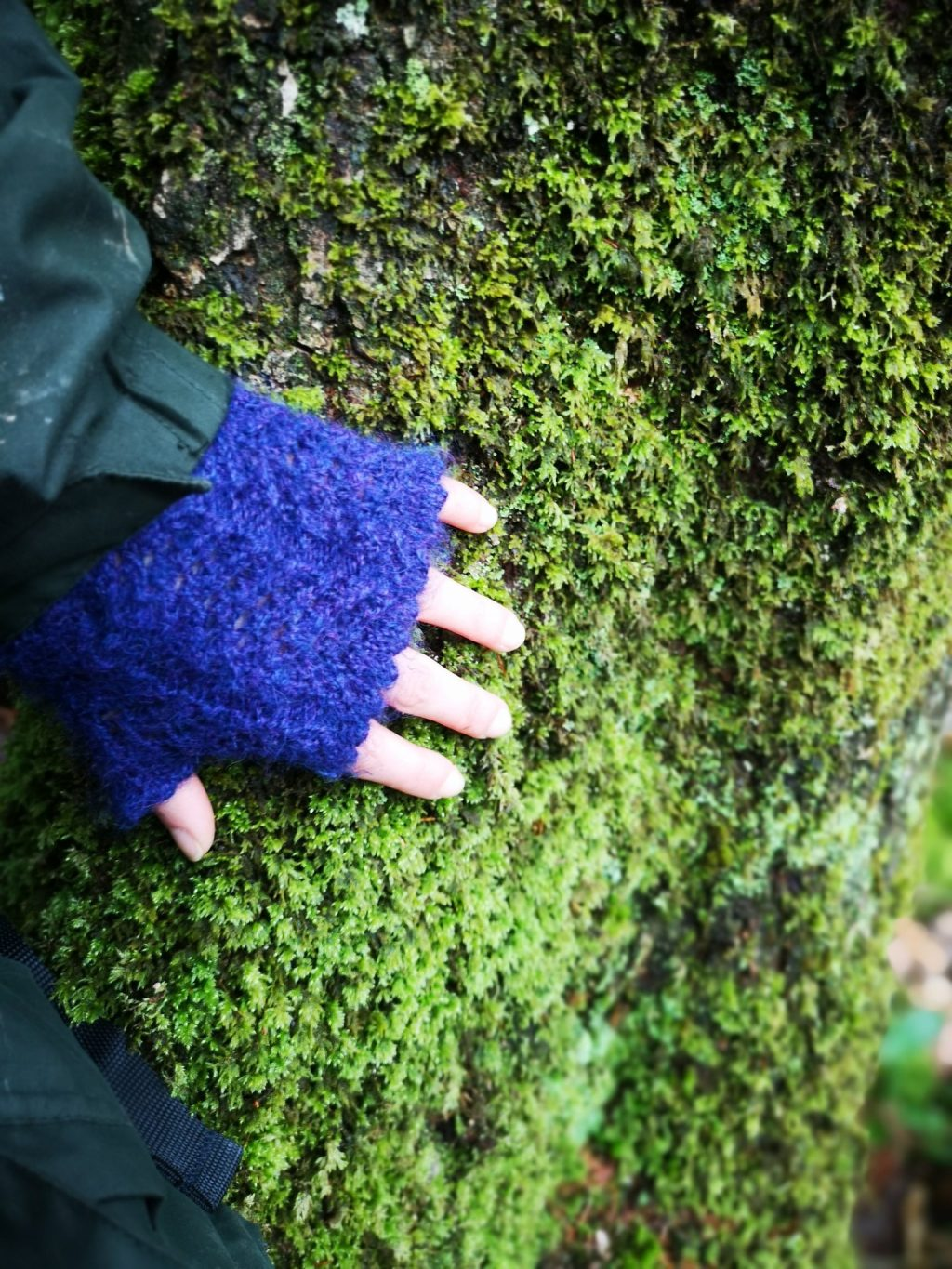 A hand in a fingerless mitten feeling the moss on a tree