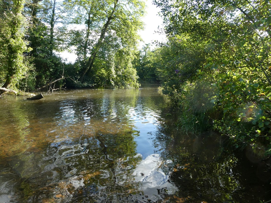 trees lining the banks of the river Culm at Uffculme