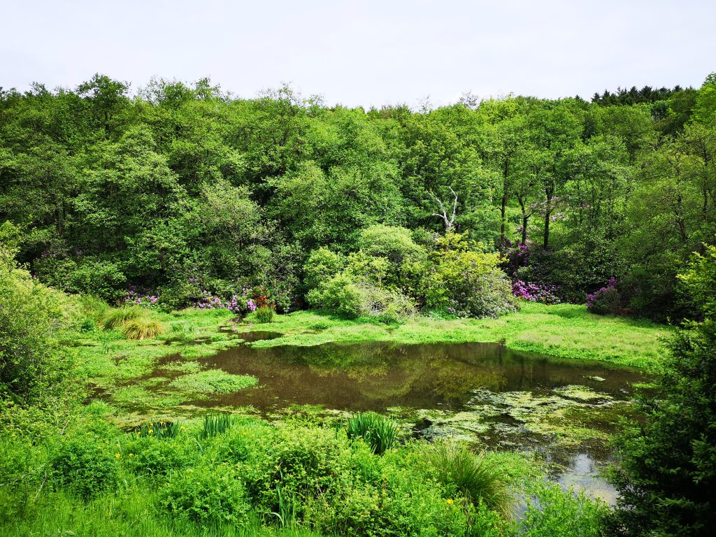 A view over the lake surrounded by vegetation
